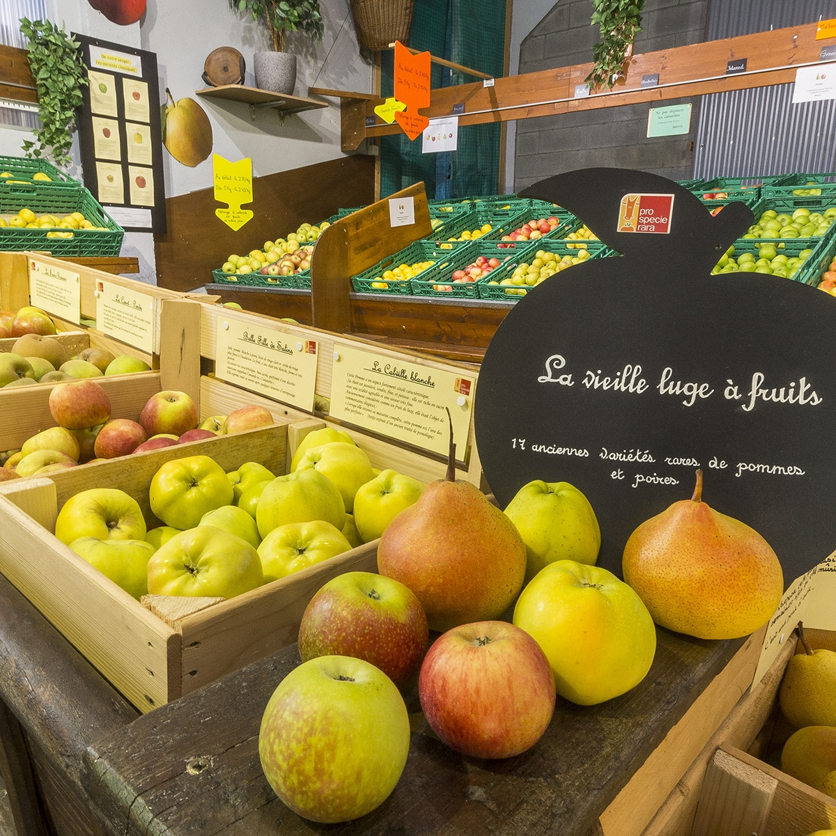 17 anciennes variétés rares de pommes et poires