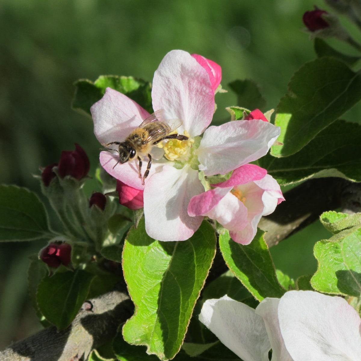 floraison prometteuse